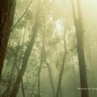 หางาน สมัครงาน WWF Greater Mekong Thailand 3