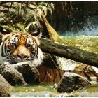 หางาน สมัครงาน WWF Greater Mekong Thailand 4